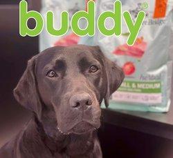 Tilbud fra Buddy i Buddy-brosjyren ( 12 dager igjen)