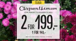 Tilbud fra Floriss i Oslo-brosjyren