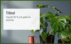 Tilbud fra Mester Grønn i Oslo-brosjyren
